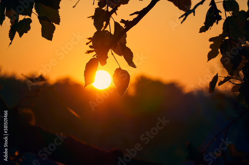 Valokuva close-up view of leaves and branches at sunset, colorful autumn forest, bright s