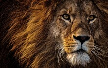 God Lion Photo
