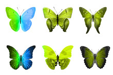 Six Color Butterflies Isolated...