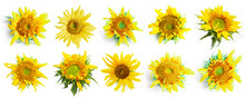 10 Set Of Sunflower Isolated O...
