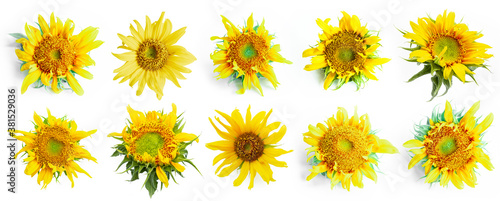 10 set of sunflower isolated on white background Wallpaper Mural