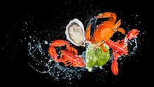 Freshy Seafood Washing