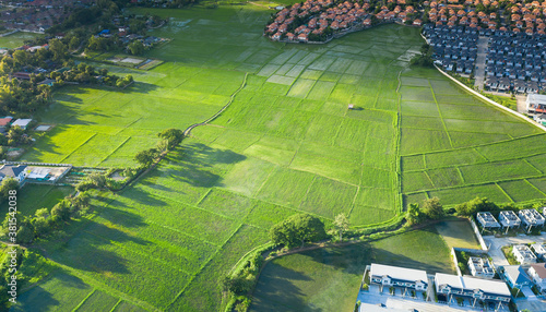 Fototapeta Cultivated land and land plot or land lot. Consist of aerial view of green field, agricultural plant and ridge. That is tract of land for cultivate, owned, sale, development, rent, buy or investment. obraz