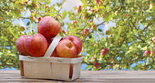 Red Apples In Little Basket On...
