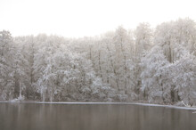 Frozen Trees Over The Pond. Co...