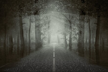 Haunted Street Inside The Fore...