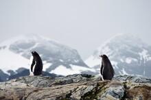 Penguin In Polar Regions