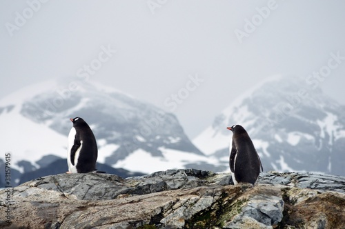 penguin in polar regions Fotobehang
