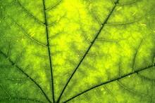 Organic Ecology Pattern. Macro...
