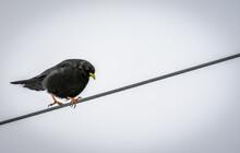 Bird Sitting On The Rope