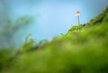 Small Mushroom In Forest Switz...
