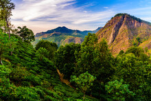 A Quiet Morning In Sri Lanka