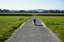 Lassie - Eine Abenteuerliche R...