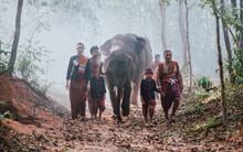 Thai Shepherds In The Jungle W...