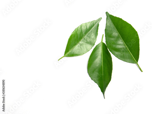 Fotografija green leaves isolated on white background