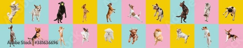Fotografie, Obraz Cute dogs and cat jumping, playing, flying, looking happy isolated on colorful or gradient background