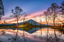 Mt. Fuji With Big Trees And La...