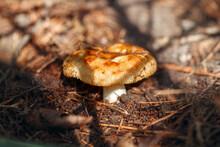 Close-up Of Dried Mushroom Growing On Field