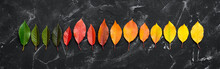 Gradient Of Colorful Autumn Le...