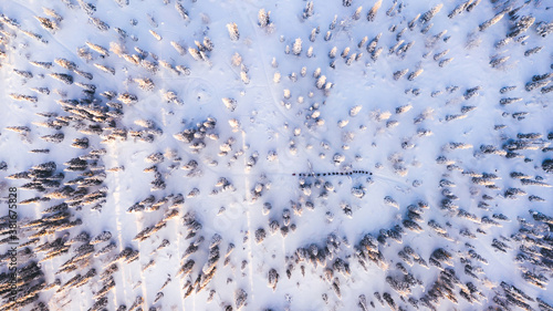 Bird's eye aerial view, group of travelers walk together on snowy path in white coniferous forest trees covered by snow, tourists discover lands on expedition in Lapland Wallpaper Mural