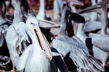 Portrait D'un Grand Oiseau Mar...