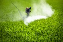 Farmer Spraying Pesticides In ...