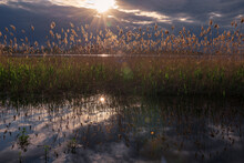 Reflection Of Cloud And Reeds In The River In Backlight
