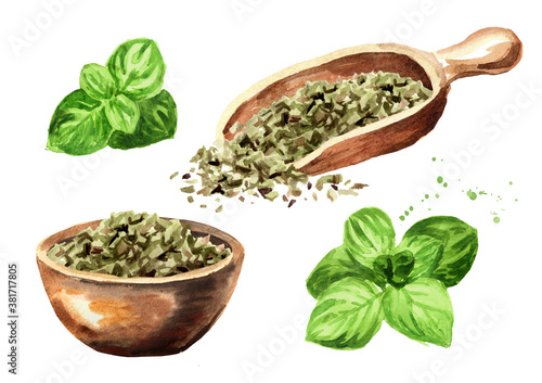 Fototapeta Dried oregano herb with fresh marjoram twigs set. Hand drawn watercolor illustration isolated on white background obraz