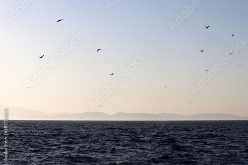 View from the sea to the mountain coast and flying seagulls in morning mist. Picturesque seascape, travel and vacation concept