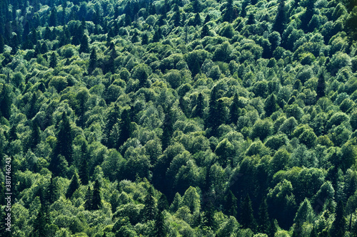bird's eye view of the mixed coniferous forest Fototapet