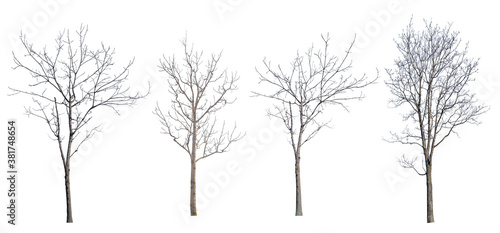 Fototapeta winter four trees with bare branches obraz