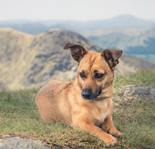 Mountains And Dogs - Hillwalking With Your Favourite Pet