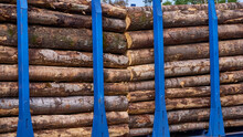 Freight Cars Loaded With Logs On Railway Tracks. Color