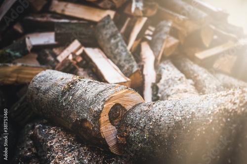 Log trunks pile, the logging timber forest wood industry Fototapet
