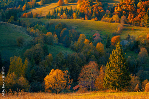 Fototapeta Yellow autumn trees on a mountain hill, beautifully illuminated by evening sunlight. A small village rural houses on the hills, at the Carpathian mountains. Ukraine. obraz