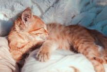 Small White Red Kitten Sleeps ...