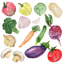 Vegetable Set. Watercolor Drawing. Red Pepper, Yellow Pepper, Cabbage, Broccoli, Garlic, Beetroot, Onion, Carrot, Cucumber, Mushrooms, Eggplant, Tomatoes.