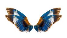 Stork-billed Kingfisher Bird W...