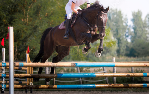 Fototapeta Young rider girl jumping on horse over obstacle.
