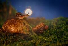 A Snail On A Boletus Against T...