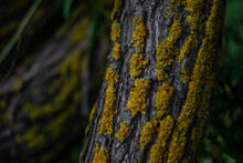 Curved Embossed Textured Tree Trunk With Bright Yellow Moss In Green Grass With Leaves, In Foliage