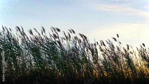 Photo grano al tramonto