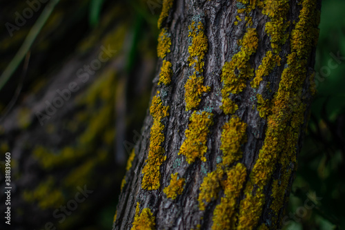 Valokuva Curved embossed textured tree trunk with bright yellow moss in green grass with