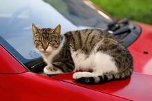 Street Cat Sits On A City Stre...