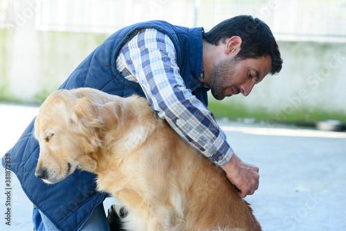 Obraz na plátně a male vet inspecting dogs fur