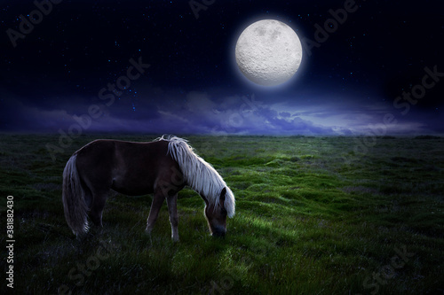 Horse in the meadow in the moonlight