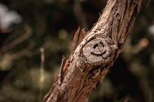 Small Tree Branch With A Cut Off Twig, Symbol Of A Smiley Face Formed Naturally On The Remaining Stump. Concepts Of Positivity And Hope, Cold Brown Autumn Colors