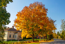 Fall Foliage Tree With Yellow Building And Blue Sky