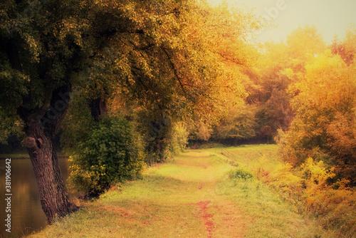 Photo of a beautiful autumn park