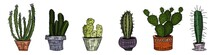A Selection Of Cactus Drawings...